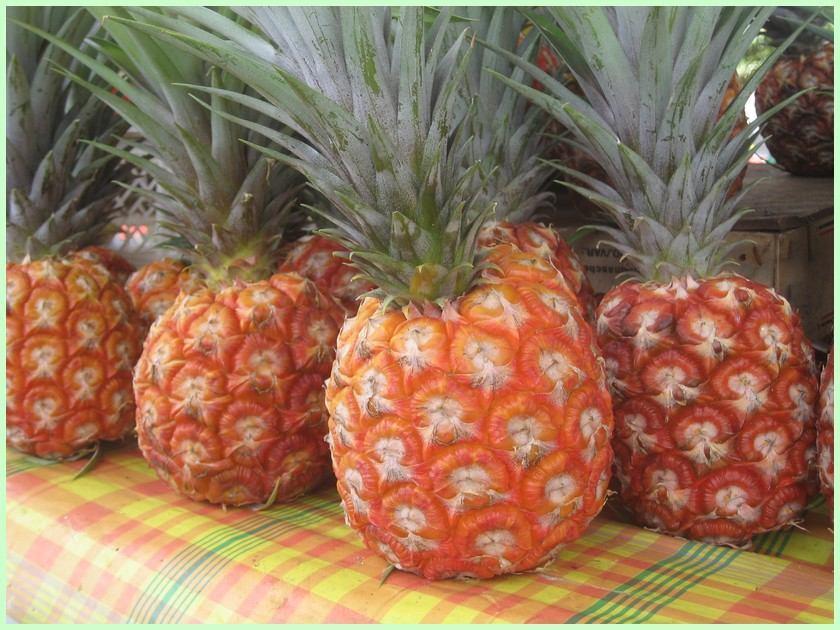 LES FRUITS COMMENÇANT PAR A Ananas023
